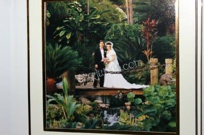 wedding in hawaii bridge