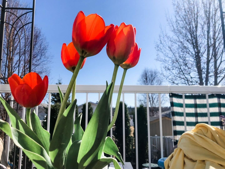 April 2021 favorites: pretty tulips