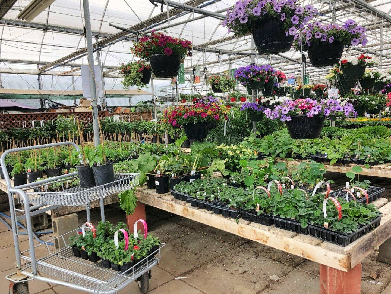 beautiful greenhouse flowers