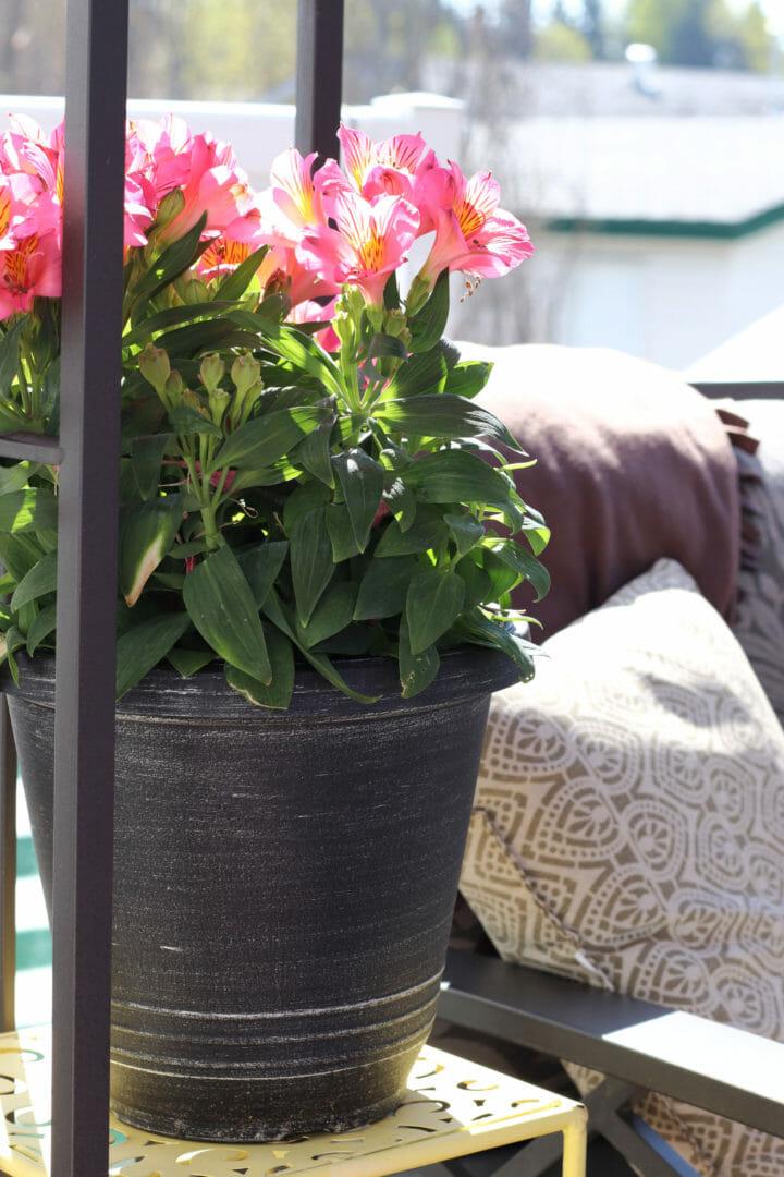 Beautiful deck flowers