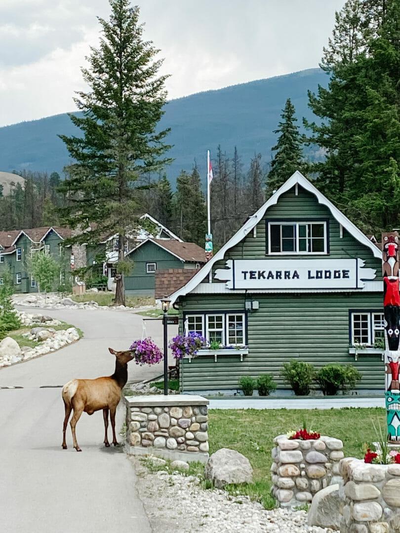 Tekarra Lodge Jasper